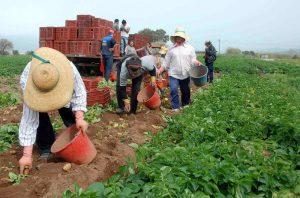 αγρότες11