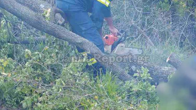 ΤΡΑΓΩΔΙΑ:Αγρότη καταπλάκωσε δέντρο που πήγε να κόψει,τον βρήκαν νεκρό μοναχές!