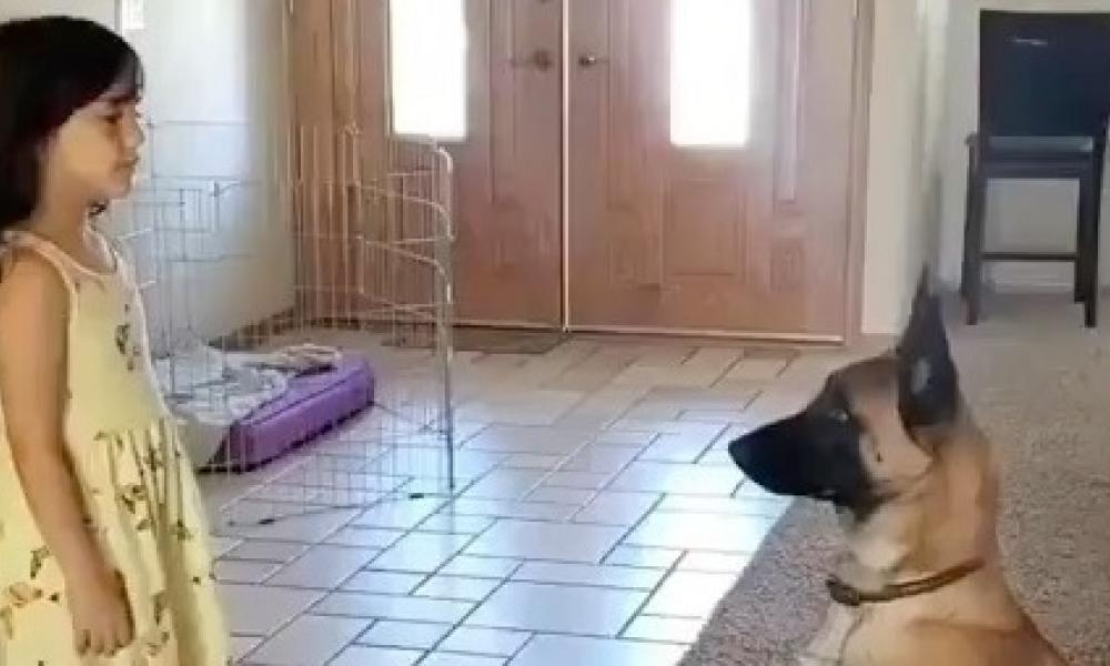 Σκύλος παίζει κρυφτό με κοριτσάκι και «κλέβει» στο μέτρημα – Βίντεο