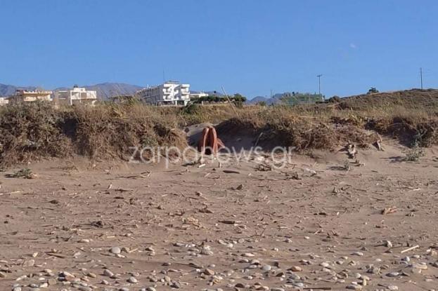 60χρονος ξάπλωσε δίπλα σε δύο κοπέλες σε παραλία και άρχισε να αυνανίζεται (βιντεο])