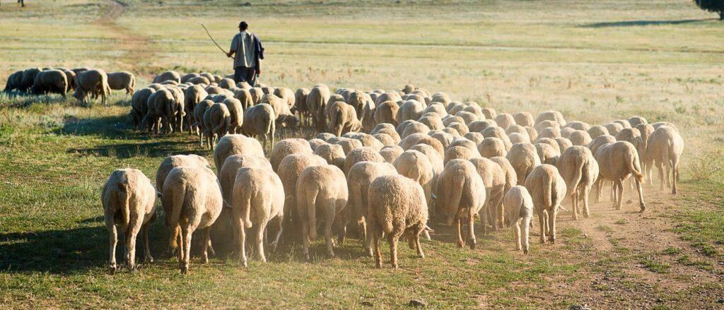 ΜΑΡΙΑ Ν. ΑΓΓΕΛΗ: Κτηνοτροφικά του Ξηρομέρου. -Αφιερωμένο στους τσοπάνηδες.