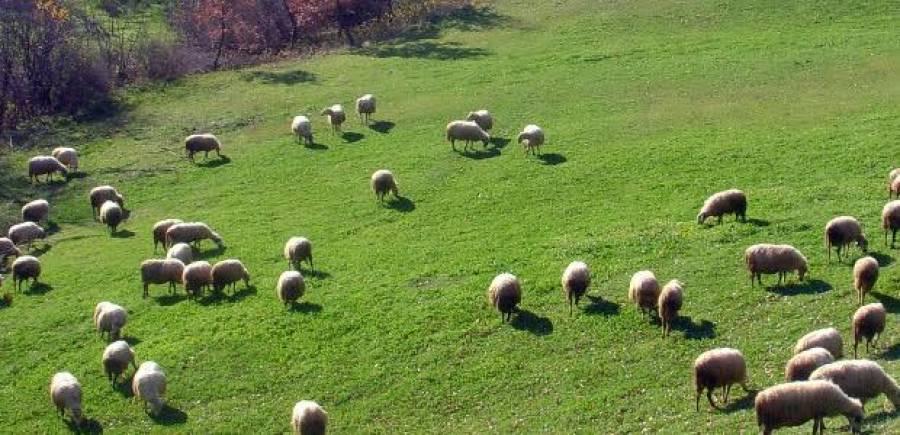 30.000 Eυρώ πρόστιμο στο  κτηνοτρόφο που σκότωσε σκυλί,είπε οτι παρενοχλούσε το κοπάδι του!