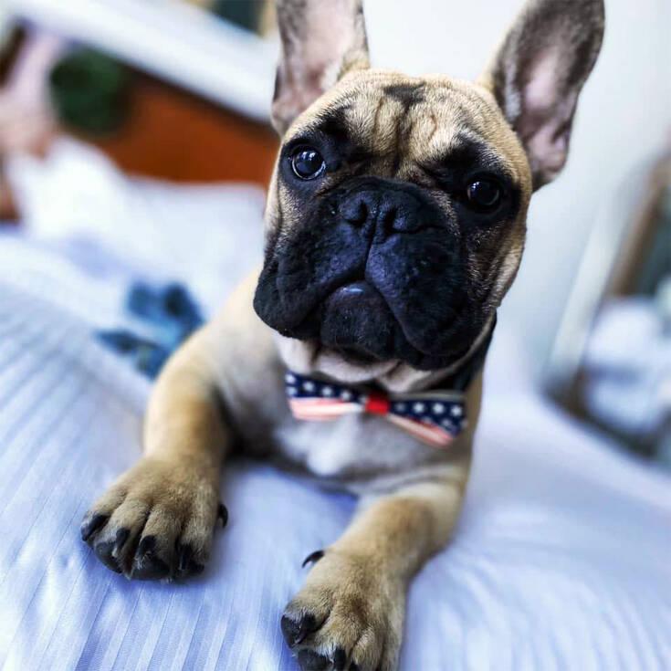 ΑΠΙΣΤΕΥΤΟ:Σκύλος εκλέχτηκε δήμαρχος με ..χιλιάδες ψήφους!