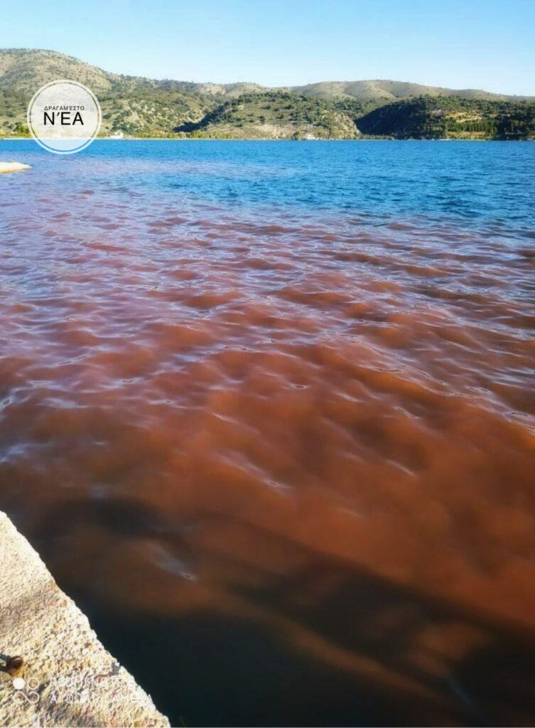 ΣΟΚ:Ασχημο δείγμα ρύπανσης των νερών στον Αστακό Ξηρομέρου!