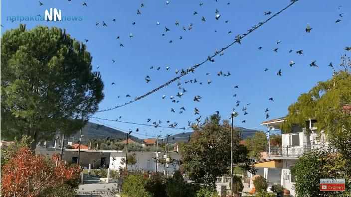 Χιλιάδες ψαρόνια στο Τρίκορφο Ναυπακτίας – Έρχεται ο χειμώνας (Video)