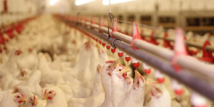 Προσοχή στην γρίπη των πτηνών που είναι σε έξαρση στην Ευρώπη