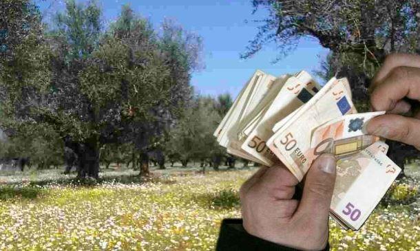 Έρχονται σημαντικές αλλαγές στις επιδοτήσεις των αγροτών. Επιδότηση ανά δένδρο για τις ελιές σχεδιάζει η ΕΕ