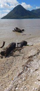 ΣΕΡΝΕΙ ΛΙΘΑΡΙΑ ΡΙΖΙΜΙΑ ΔΕΝΤΡΑ ΞΕΡΙΖΟΜΕΝΑ ΤΟ ΡΕΜΑ ΤΟΥ ΒΑΡΝΑΚΑ !!!Όλα στη θάλασσα !!!!